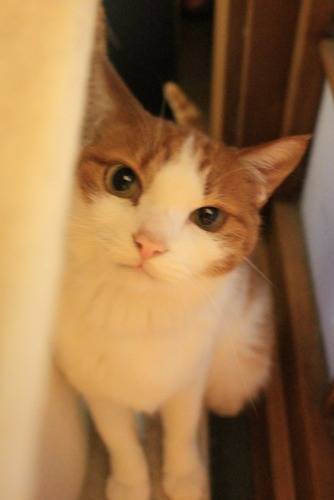 ブログNo.414(猫を被っていた猫)3