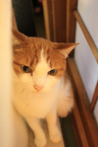 ブログNo.414(猫を被っていた猫)4