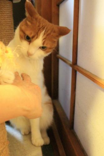 ブログNo.414(猫を被っていた猫)7