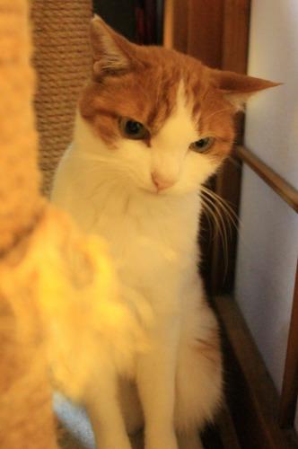 ブログNo.414(猫を被っていた猫)8