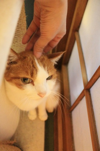 ブログNo.414(猫を被っていた猫)9