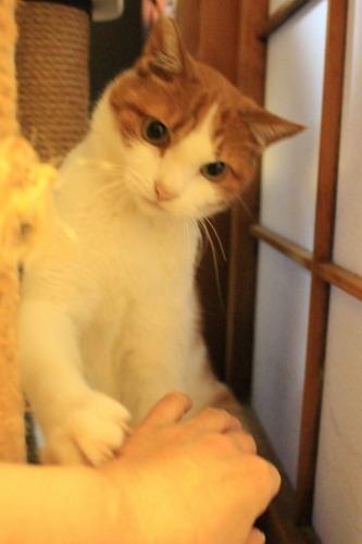 ブログNo.414(猫を被っていた猫)11
