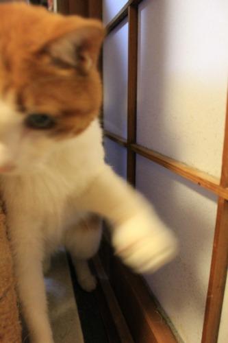 ブログNo.414(猫を被っていた猫)12