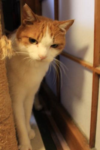 ブログNo.414(猫を被っていた猫)13