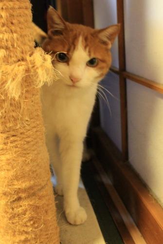 ブログNo.414(猫を被っていた猫)14