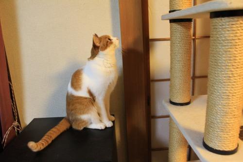 ブログNo.423(7分間の猫の動き)4