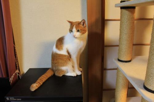 ブログNo.423(7分間の猫の動き)5