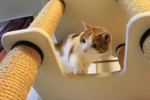 ブログNo.423(7分間の猫の動き)6