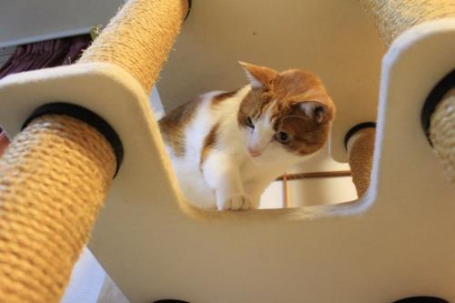 ブログNo.423(7分間の猫の動き)7