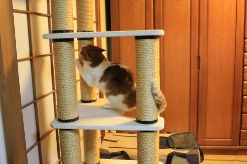 ブログNo.423(7分間の猫の動き)9