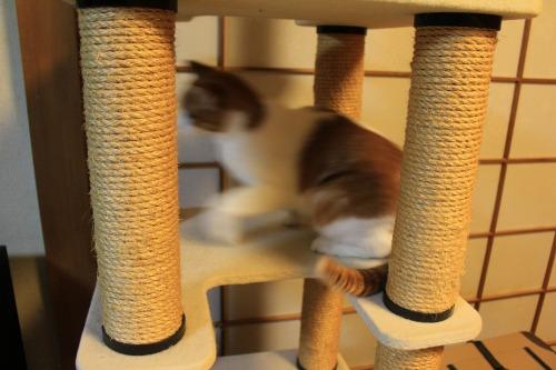 ブログNo.423(7分間の猫の動き)11