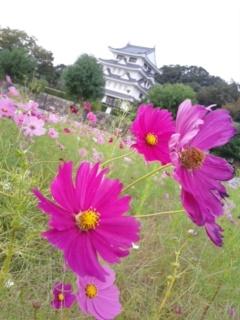 kosumosu2015109.jpg