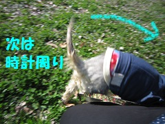 IMG_7298-1.jpg