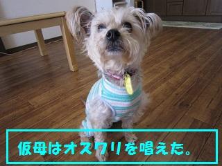 IMG_7406-1.jpg