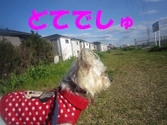 IMG_8015-1.jpg