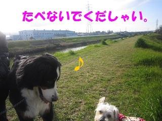 IMG_8066-1.jpg