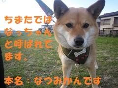 IMG_8110-1.jpg