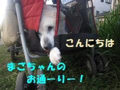 IMG_8116-1.jpg