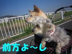 IMG_8210-1.jpg
