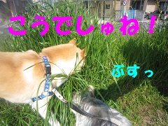 IMG_8229-1.jpg