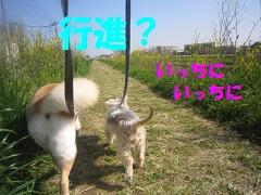 IMG_8234-1.jpg