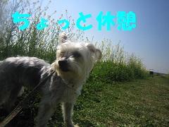 IMG_8248-1.jpg