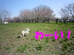 IMG_8292-1.jpg