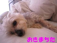IMG_8497-11.jpg