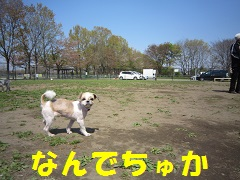 IMG_8789-1.jpg