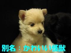 IMG_8850-1.jpg