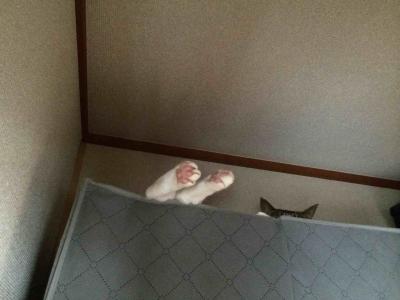 押入れで寝るバカ猫