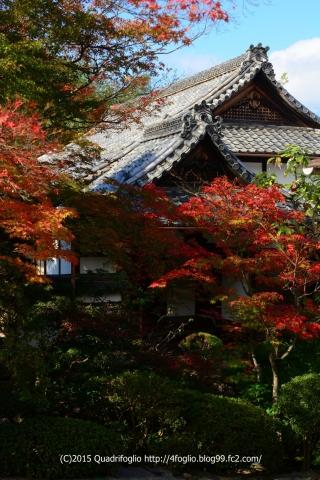 2015秋の京都_栄摂院