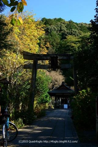 2015秋の京都_大豊神社