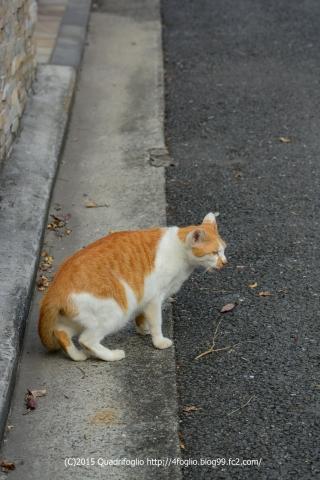 横浜にゃんこ