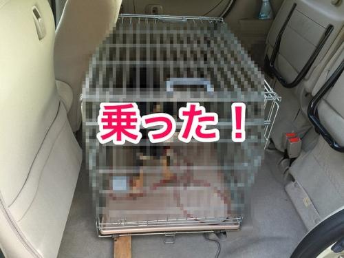 ホンダ N-BOX ペットサークル
