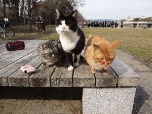 NPO動物愛護を考えるKyoto