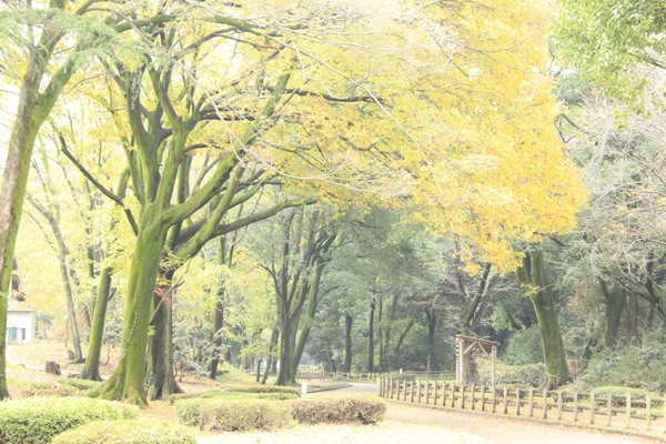 IMG_4913群馬の森12