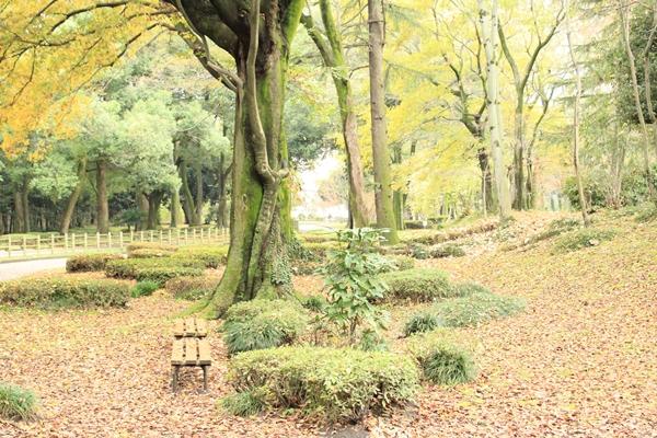 IMG_4922群馬の森3