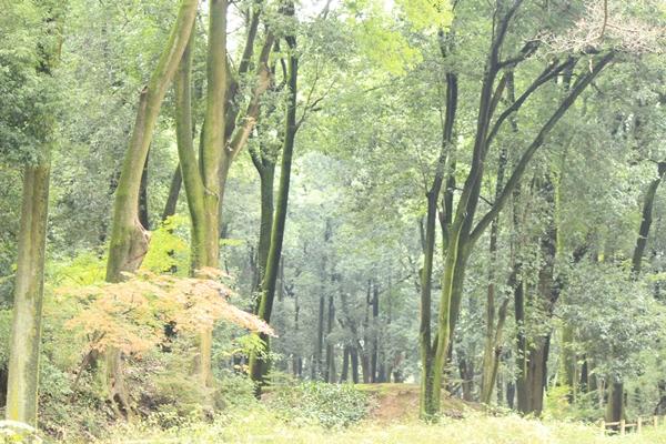 IMG_4951群馬の森1120