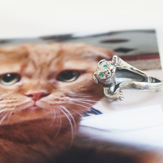 猫カスタム・スコティッシュのコナちゃん