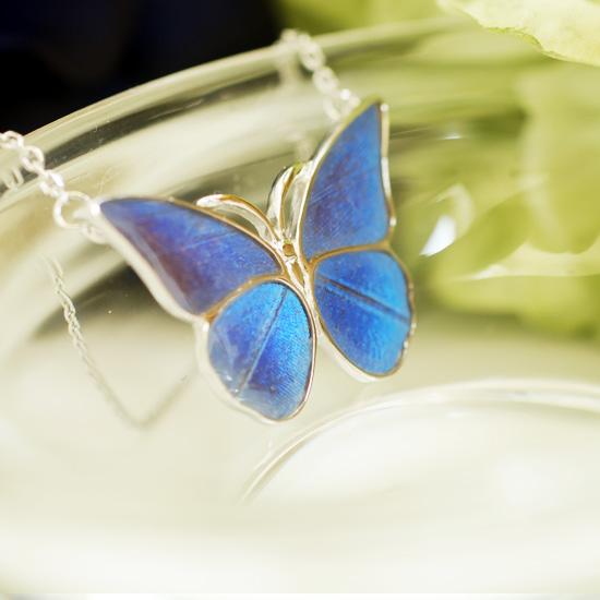 モルフォ蝶まっすぐタイプ仕様変更