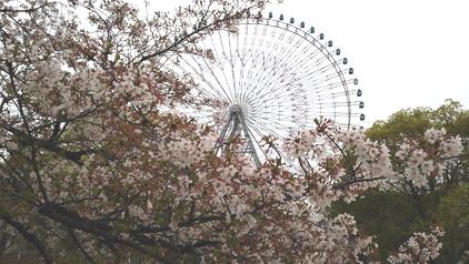 sakuraplus.jpg