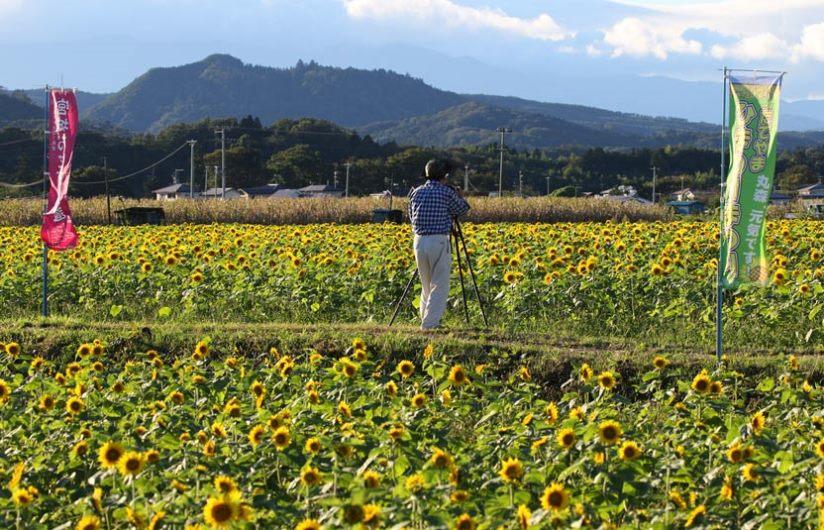 himawari3250.jpg