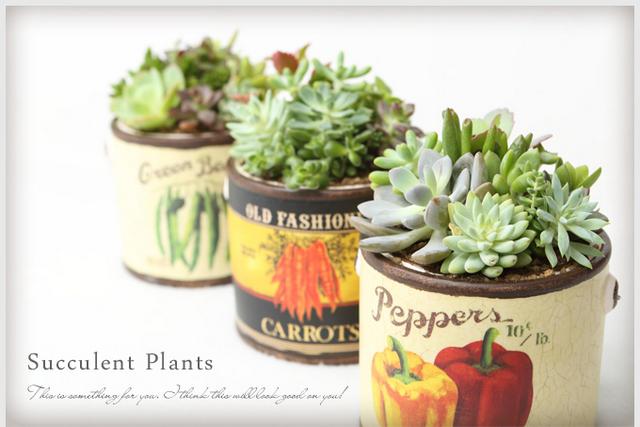 多肉植物 インテリア おしゃれな観葉 おしゃれな植物