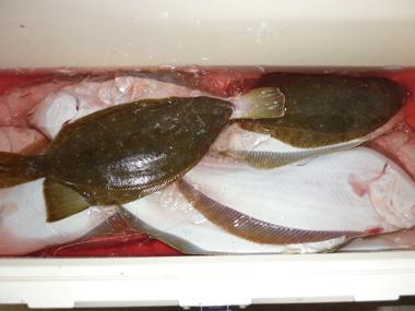 魚釣り 船つり 大漁 爆釣 美味しい ヒラメ 花夢