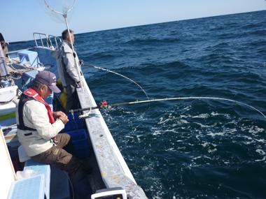 魚釣り 大漁 ヒラメ 美味しい 花夢