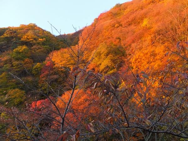 bandaiatami-hanayama21-web600.jpg