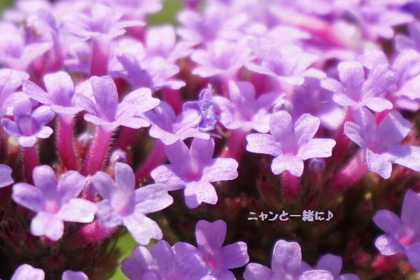 ba-benadai91.jpg