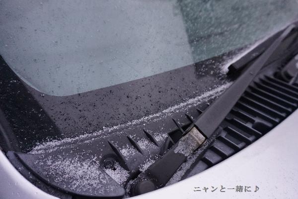 mycayuki1108.jpg