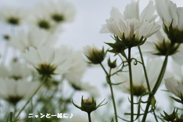nyancos9274.jpg